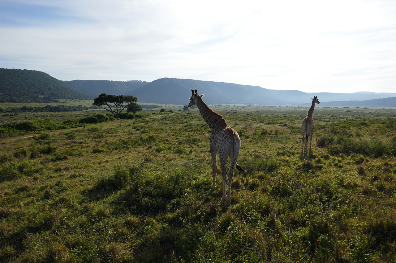 Seasons in South Africa: Weather and Climate