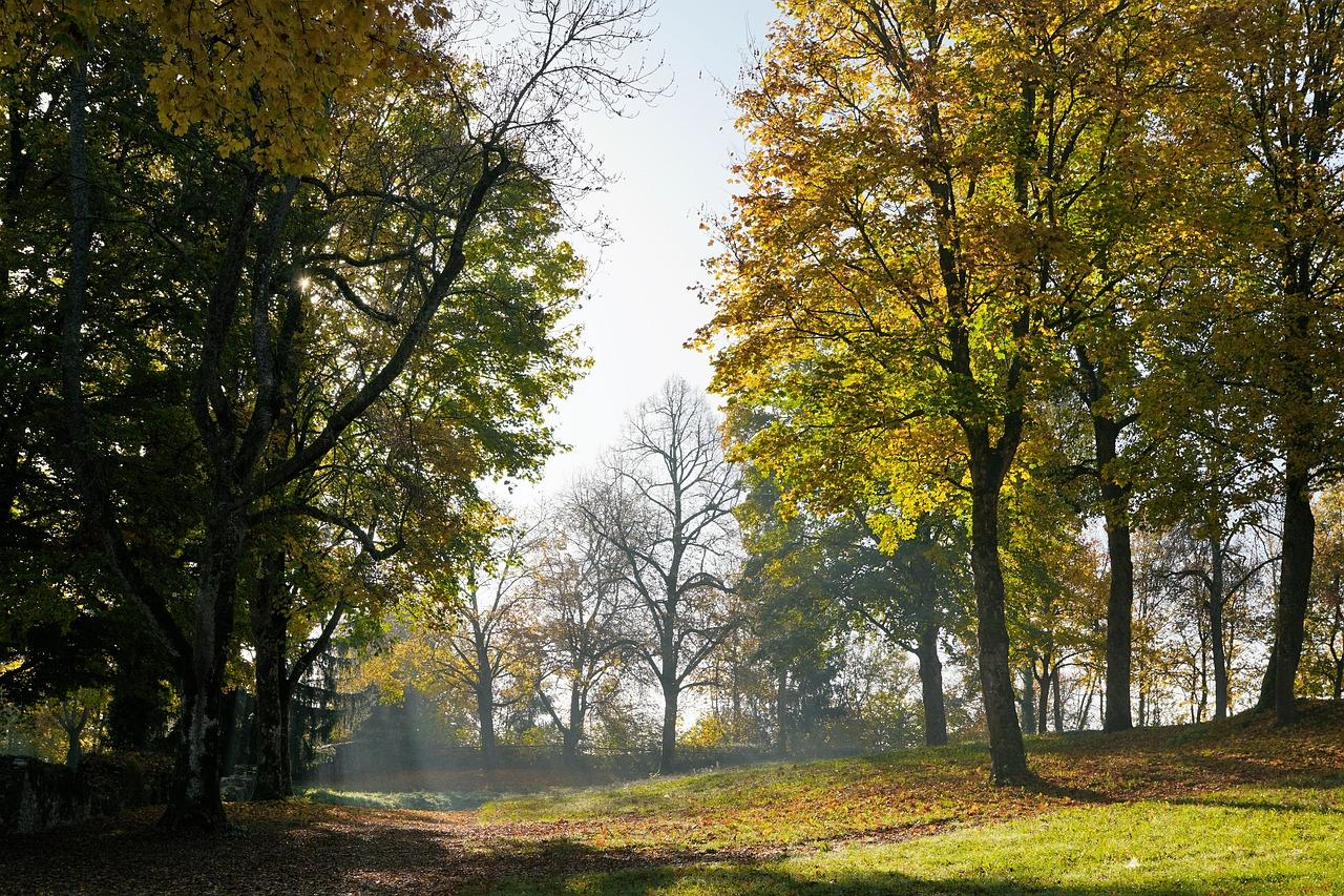 autumn season  about nature in autumn moments