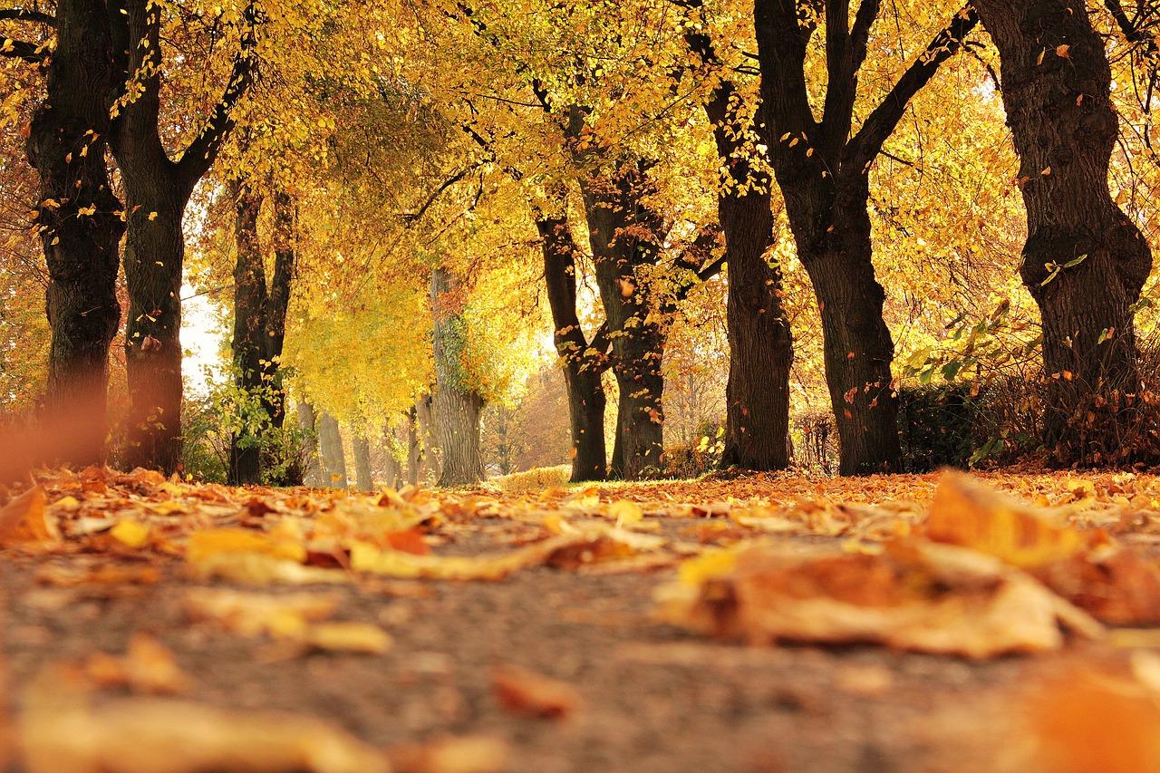 Autumn (toamna)  Autumn-3