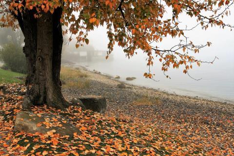 autumn in quotes